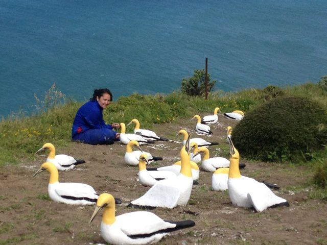 È morto Nigel: l'uccello più triste e solo del mondo, innamorato di una femmina di cemento