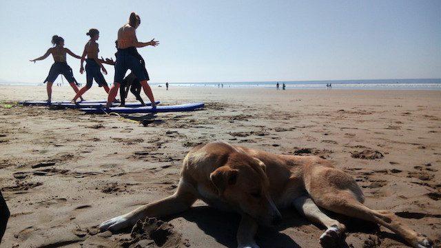 Le r ve vanoui des chiens errants au maroc tu s coup for Exemple de reglement interieur association