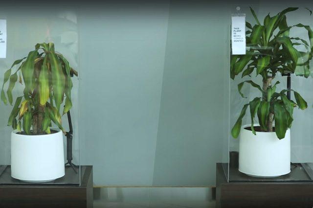 """""""Le piante hanno i sentimenti come le persone"""": l'assurdo esperimento di IKEA"""