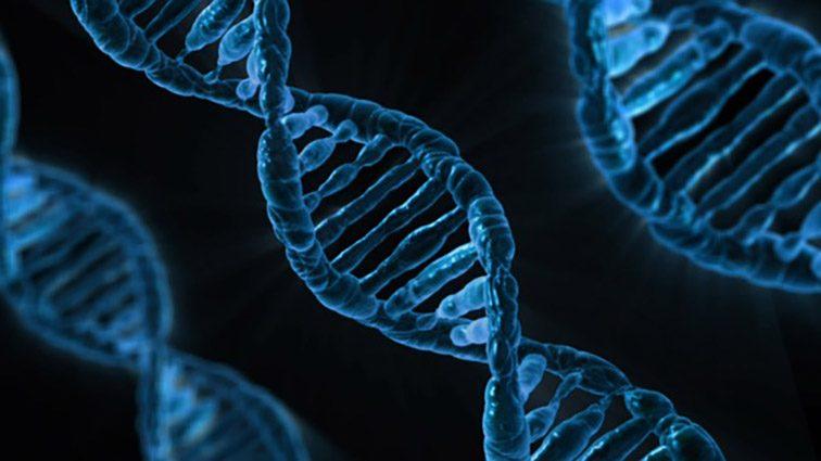 Il 'taglia e incolla' genetico è fuori controllo? Nuovi dubbi sul CRISPR/Cas9