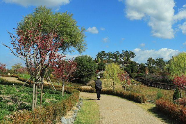 Shinrin yoku, cosa sono i 'bagni nella foresta' che ci proteggono da malattie e morte precoce