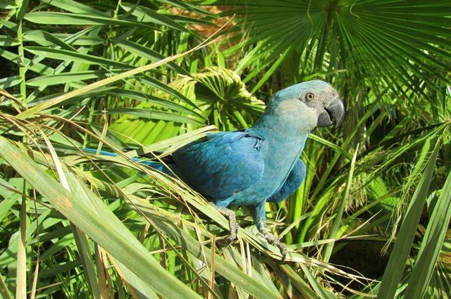 Credit: Al Wabra Wildlife Preservation