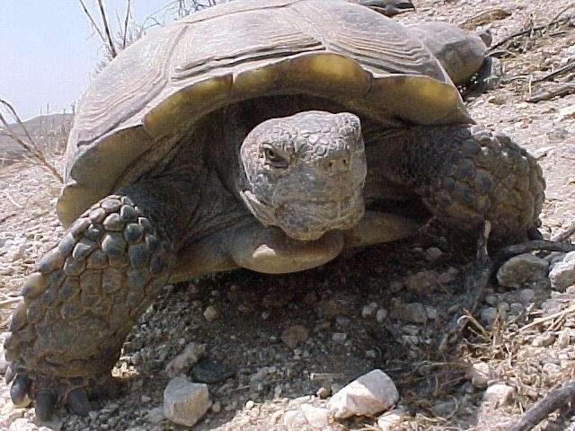 Credit: Jeff Lovich, USGS, Southwest Biological Science Center