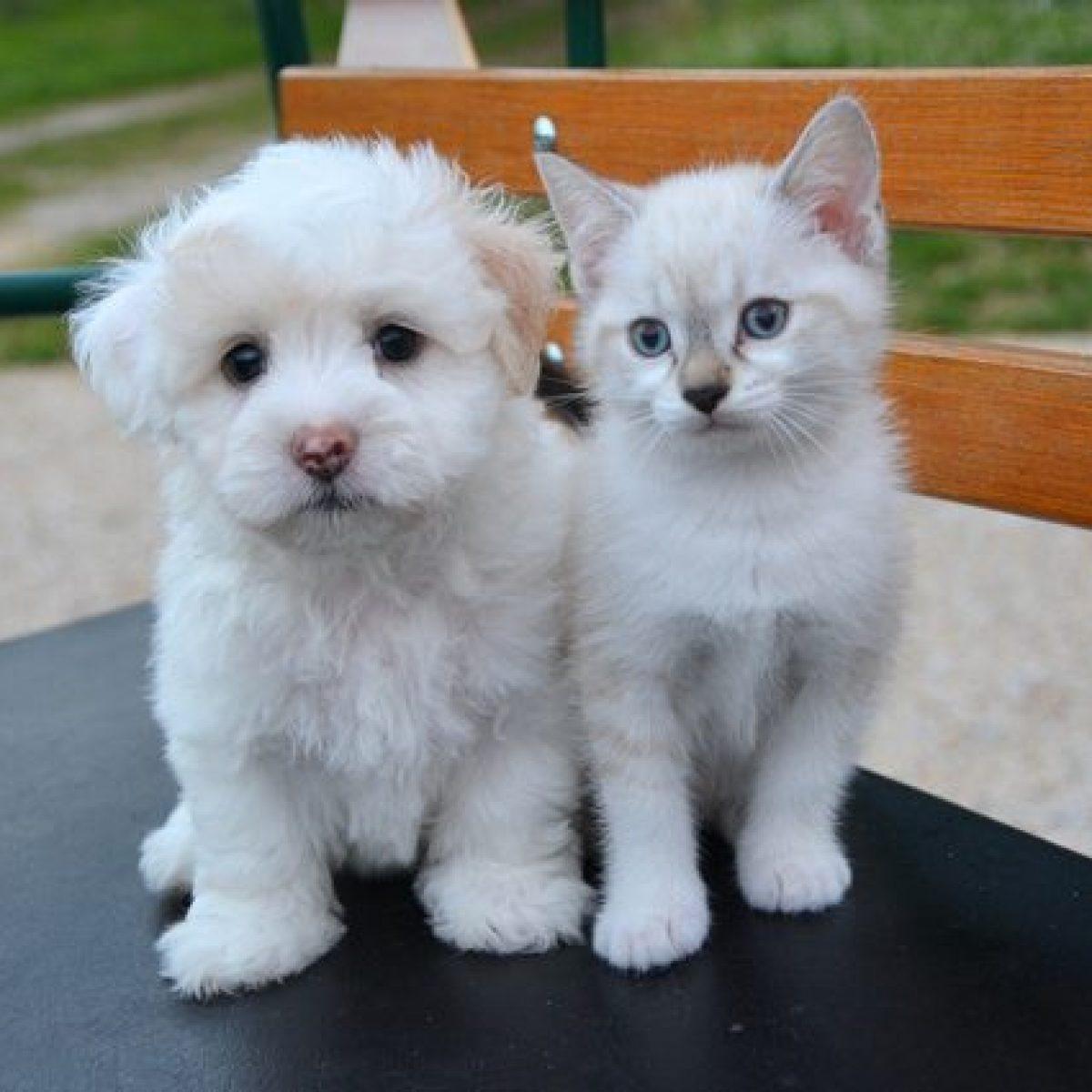 Stop A Vendita Di Cuccioli Di Cani E Gatti Nei Negozi Britannici