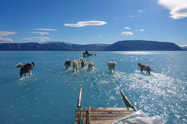 Groenlandia, cani trainano slitta sull'acqua: foto mostra sc