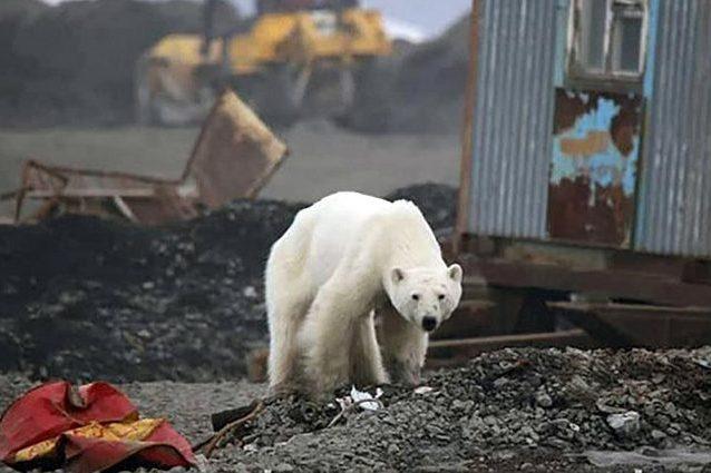 In Siberia l