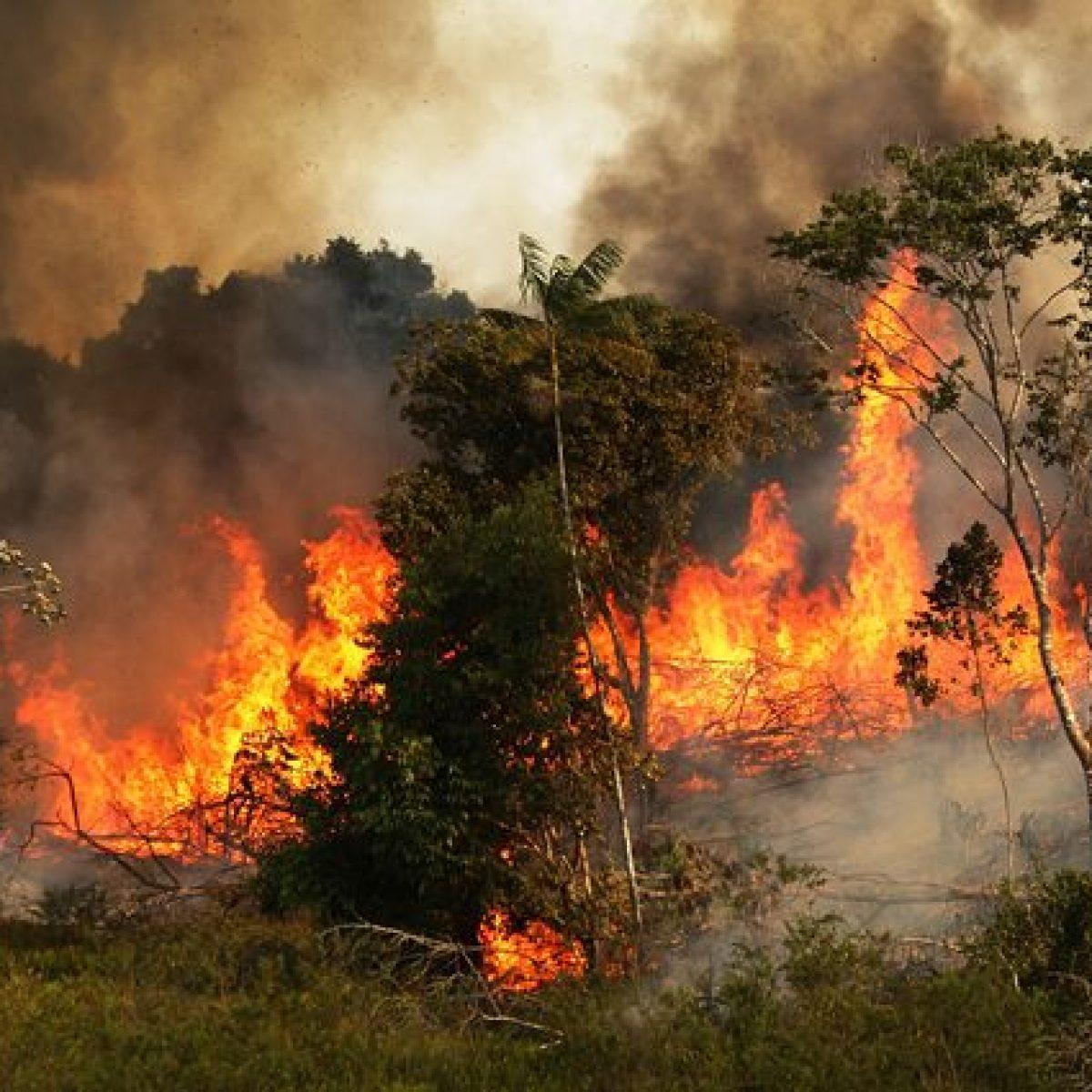 Incendi record in Amazzonia: perché è un dramma per l'intero Pianeta