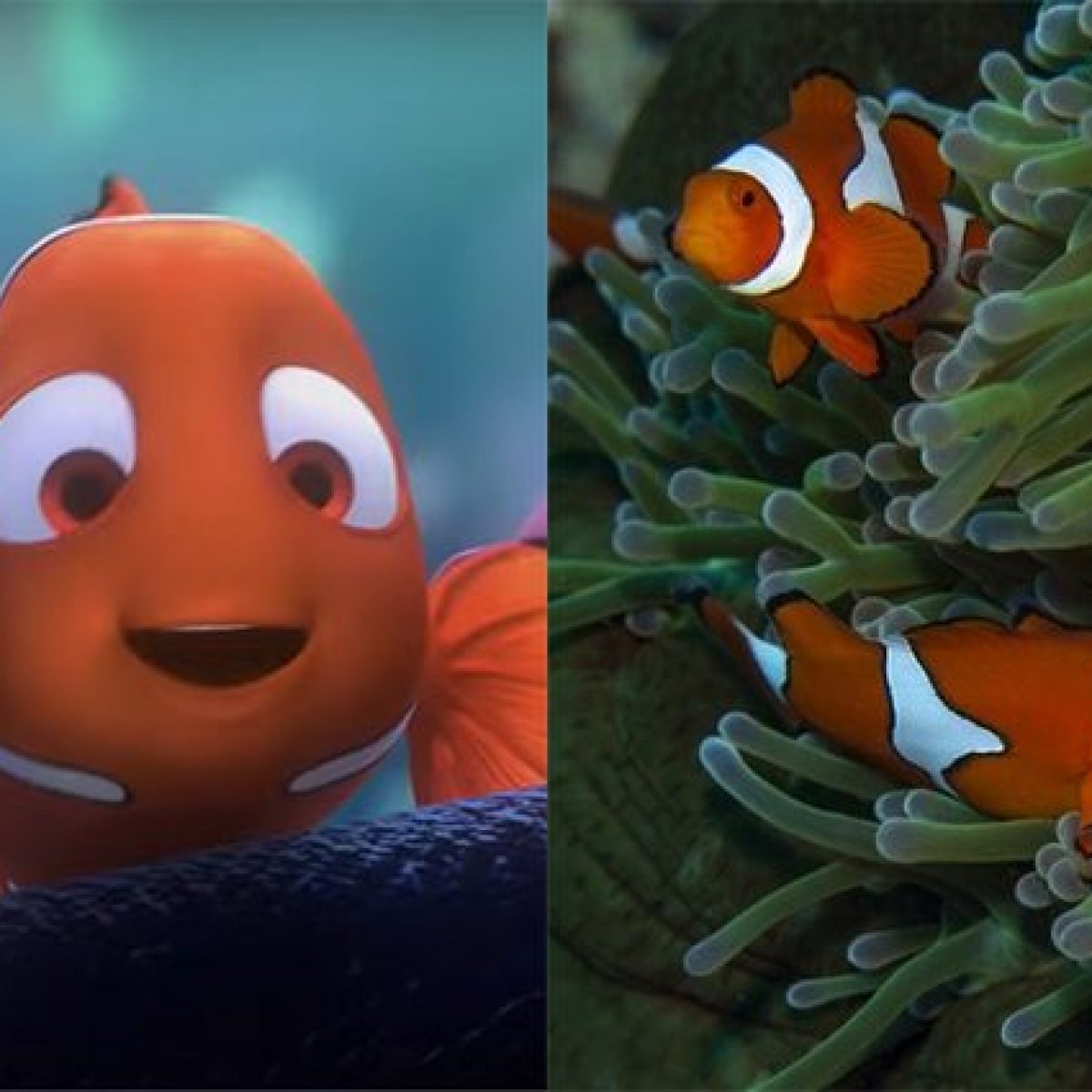 Dove Vive Il Pesce Pagliaccio.Cambiamenti Climatici Nemo Rischia L Estinzione I Pesci