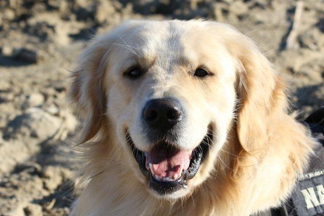 L'addomesticamento dei cani iniziato già 28.500 anni fa: lo