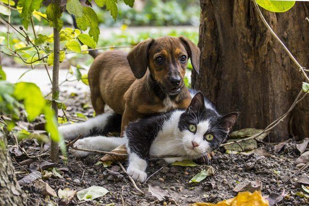 Coronavirus, cani e gatti non si ammalano e non lo trasmetto