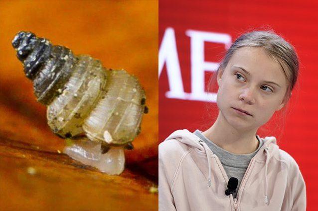Nuova specie di chiocciola dedicata a Greta Thunberg: minacc