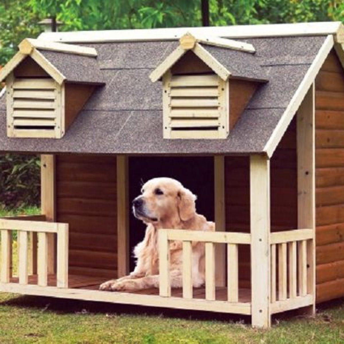 Cucce Design Per Cani migliori cucce per cani da interno o da esterno del 2020