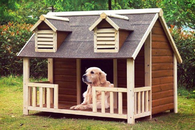 Migliori cucce per cani da interno o da esterno del 2020