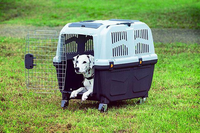 Migliori trasportini per cani del 2020