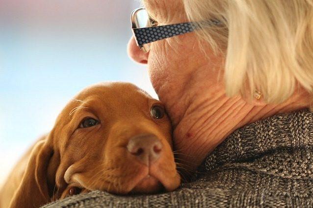 Chi ha un cane potrebbe ammalarsi meno di coronavirus: lo st