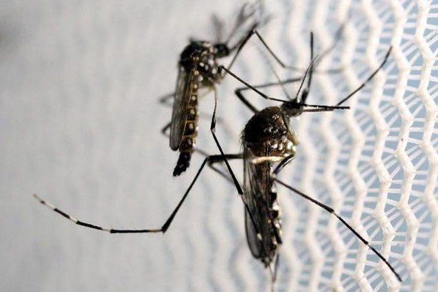 Google libererà 20 milioni di zanzare: ecco perché