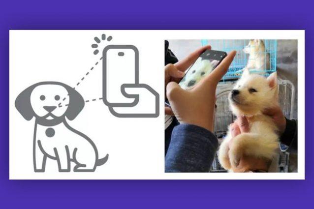 maschera per cani antivirus
